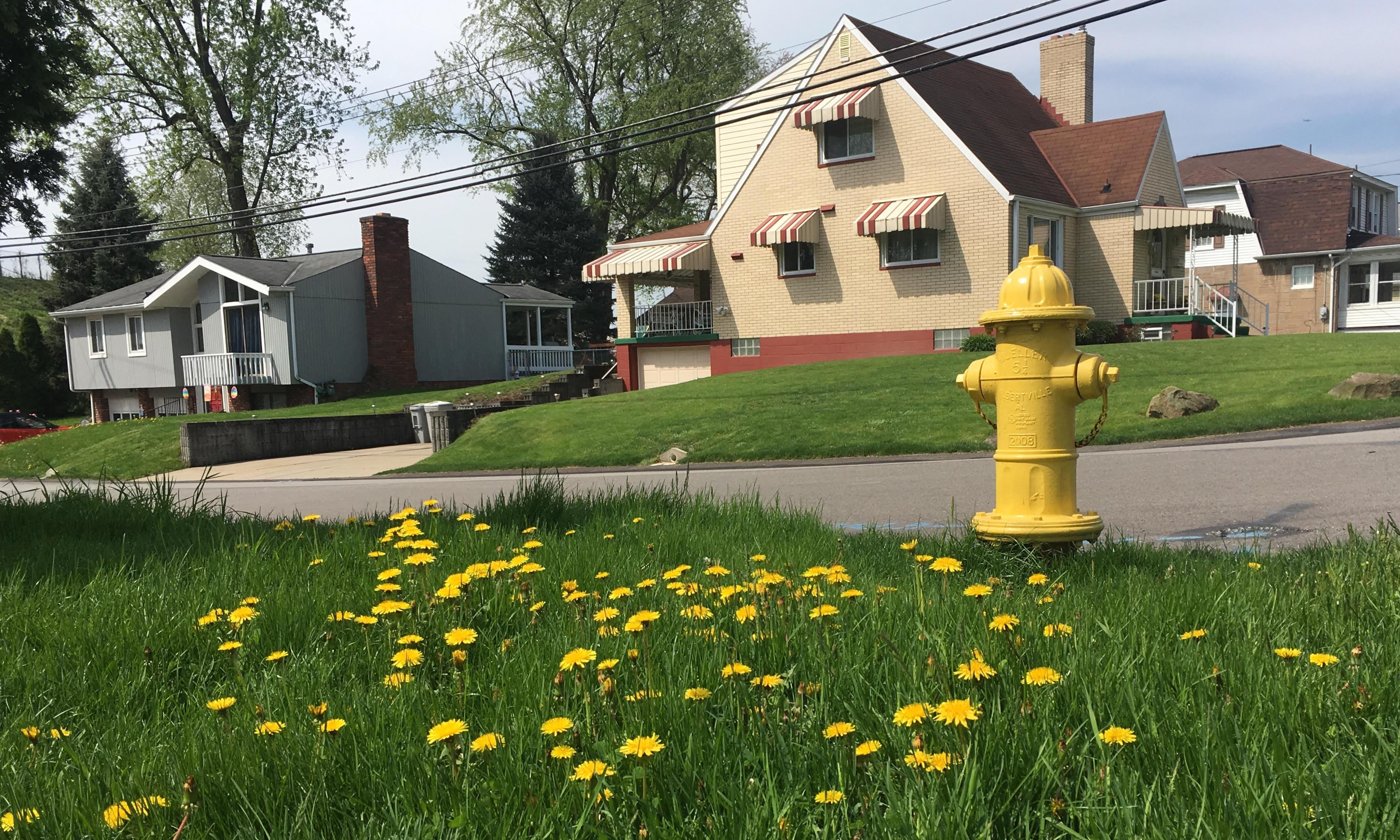 A Bee-Friendly Lawn