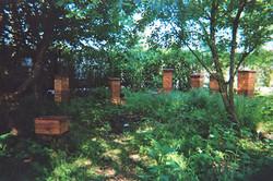 Secret Hive Garden