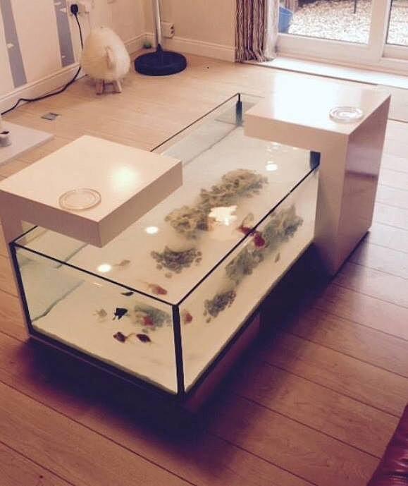dc aquariums uk custom aquarium and vivarium manufacturer | coffee