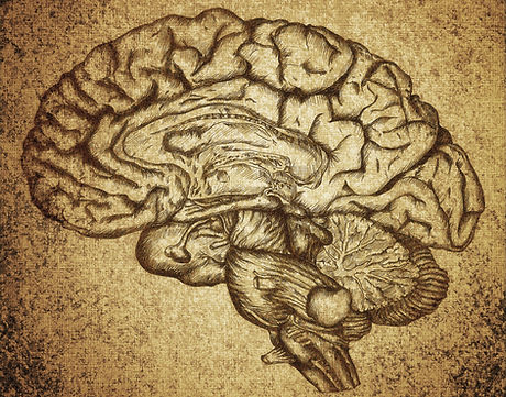 Drawing of human brain - OalandThraist EMDR Thrapist Trauma PTSD
