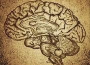 Esboço cérebro