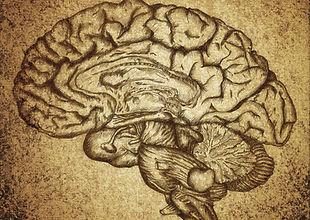 Boceto del cerebro