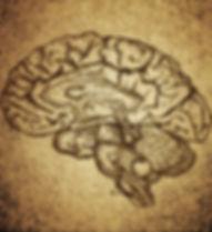 뇌 스케치