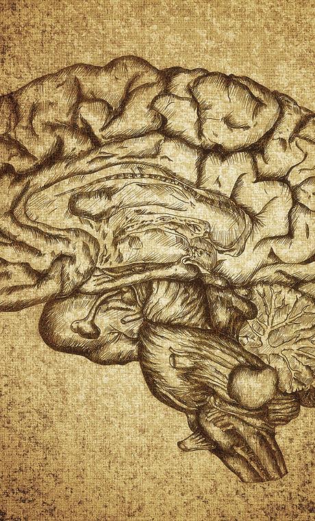 Gehirn-Sketch