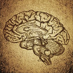 Gravure de l'anatomique d'un cerveau style rétro.