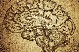 image du systeme nerveux et du cerveau