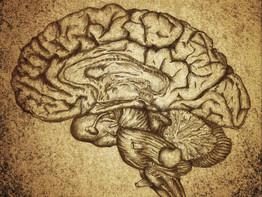 נורופידבק - אימון מוחי ביתי