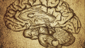Neuro rights, the new human rights