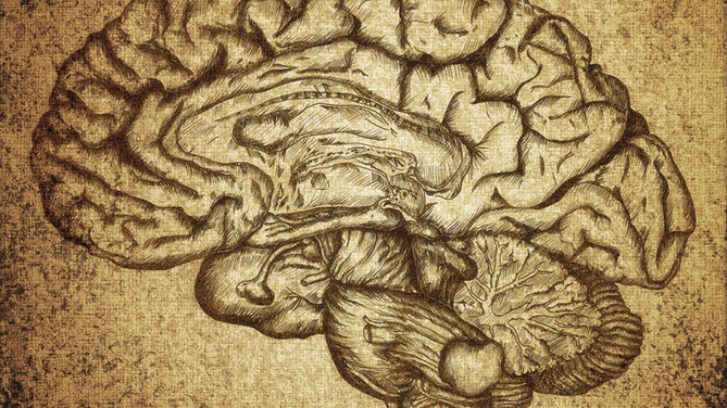 The Three Brains