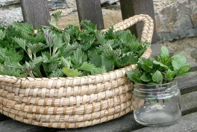 Herb of the Week