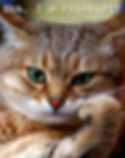 cat im2.jpg