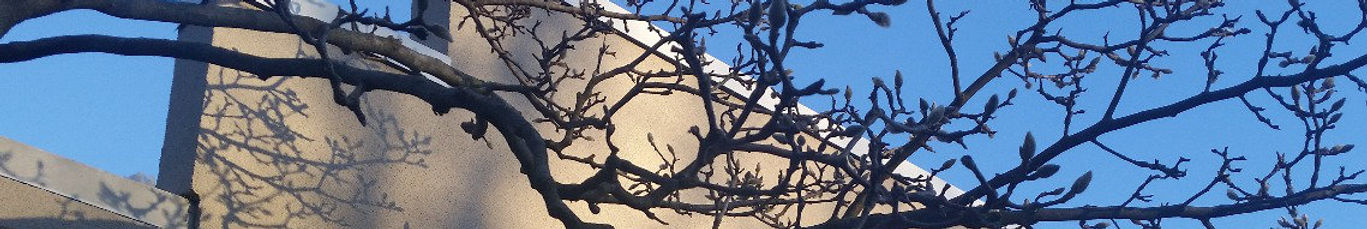 Tree branches create shadows on the front of the Tenafly Public Library