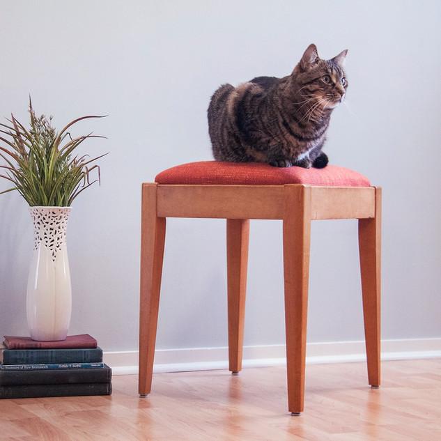 _orange stool izzy.jpg