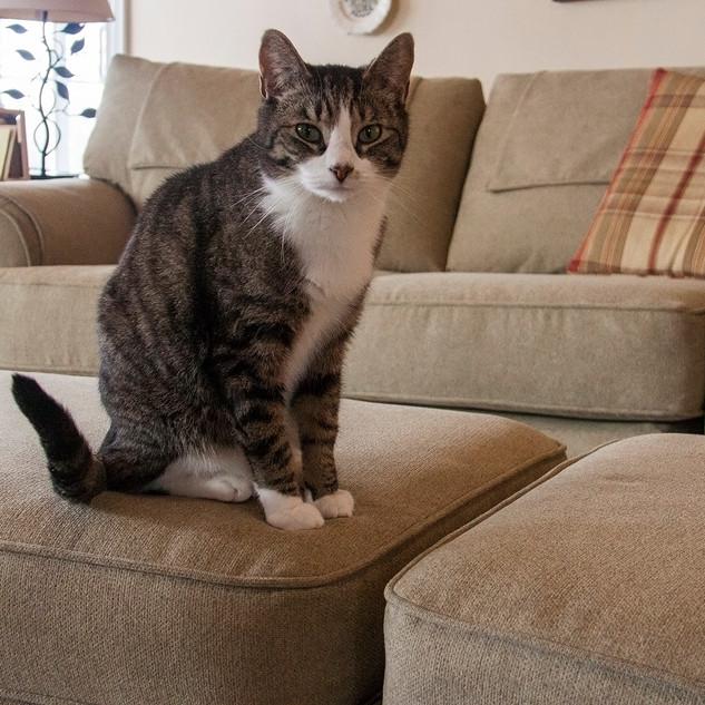 _sage sectional beau cat.jpg