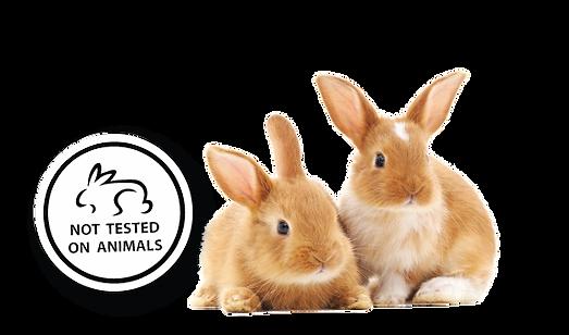 no testing in animal-01.png