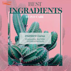 เติมความชุ่มชื้นให้ผิว ด้วย Cactus หรือกระบองเพชร