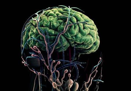 IQ 8 떨어지고 뇌는 10년 늙는다, 무시무시한 코로나 후유증