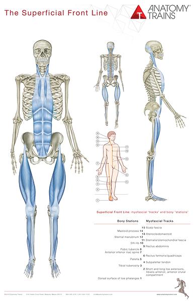 anatomy trains 1.png