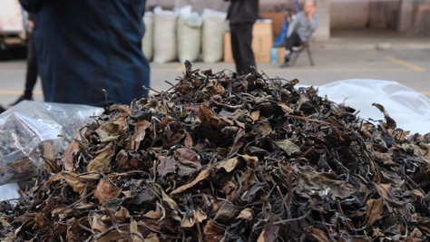 The Inconceivable Lie We've ALL Been Told About White Tea