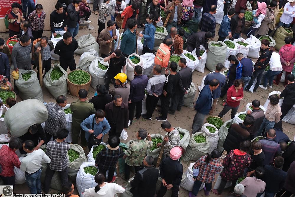 Fuding White Tea Market 2021. Source: One River Tea