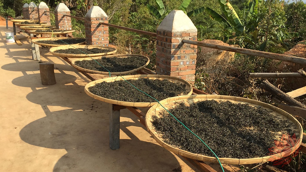 Puer being laid out to dry