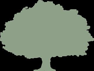 selu oak green trans.png