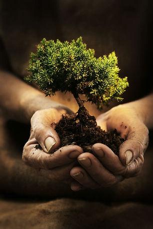 dirt hands tree.jpg