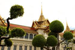 GRAND PALACE HEDGE TREES