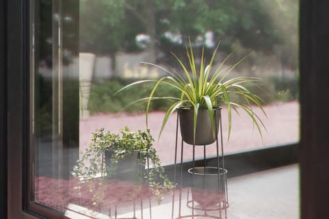 Pflanzen im Wintergarten