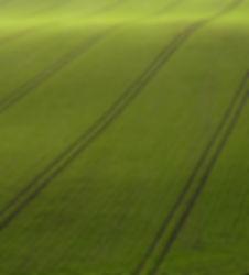 Opinião de Arial do campo verde