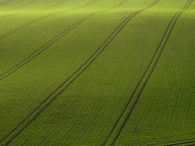 Arial View of Green Field