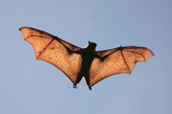 bats_lg.jpg