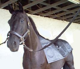 Curavet PEMF equine blanket