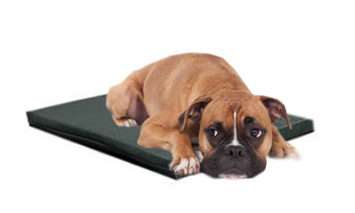 Dog on Curavet PEMF mat