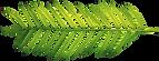PinClipart.com_fern-leaf-clip-art_404882