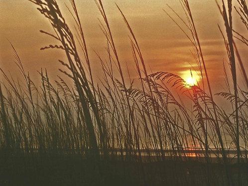 Sea Wheat at Sunrise.  Hilton Head Island