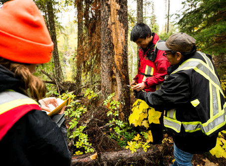 First Nations and Forestry Research: A Natural Partnership