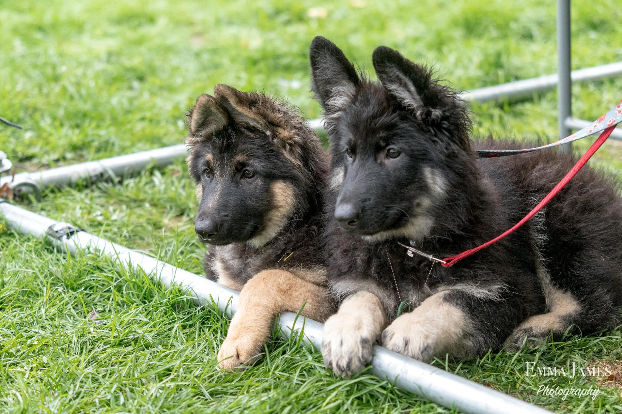 Puppy Foundation Skills Course - October