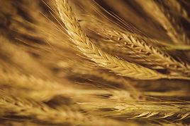 Pan elaborado con productos naturales