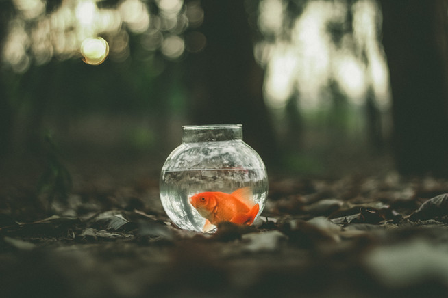 Room To Grow: The Goldfish Theory
