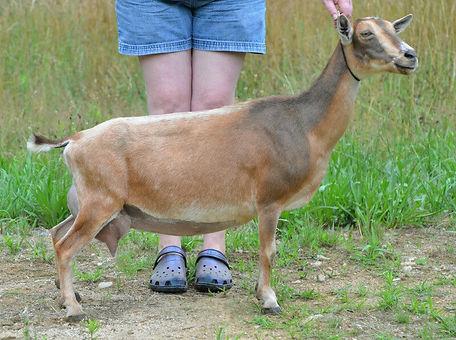 Gazelle.jpg