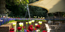 Milsoms awning with flowers_edited