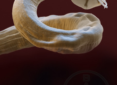 Preventing future spread of lungworm