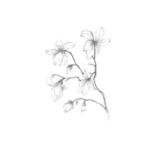 花②ブラッシュアップ済.jpg