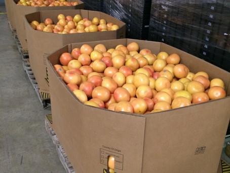 Edinburg Citrus Association Experiences New Grower Partnerships, Increased Acreage and an Expanding