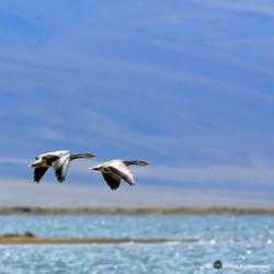 A birds paradise...