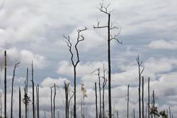 Massive Deforestation in Borneo