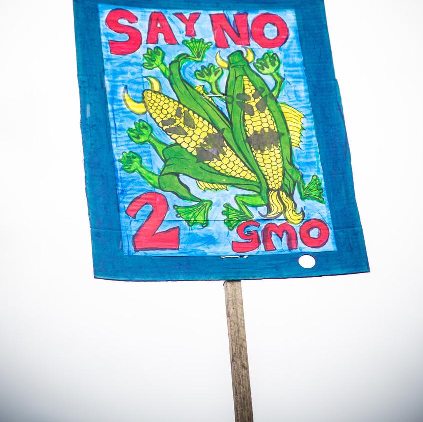 NO-GMO-MONSANTO-1-17