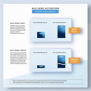 Nrf2 Gene Activation Chart.png