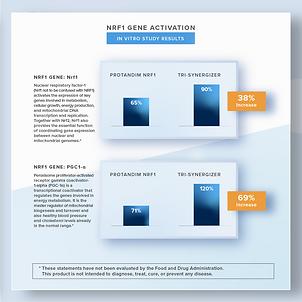 NRF1 Gene Activation Chart.png